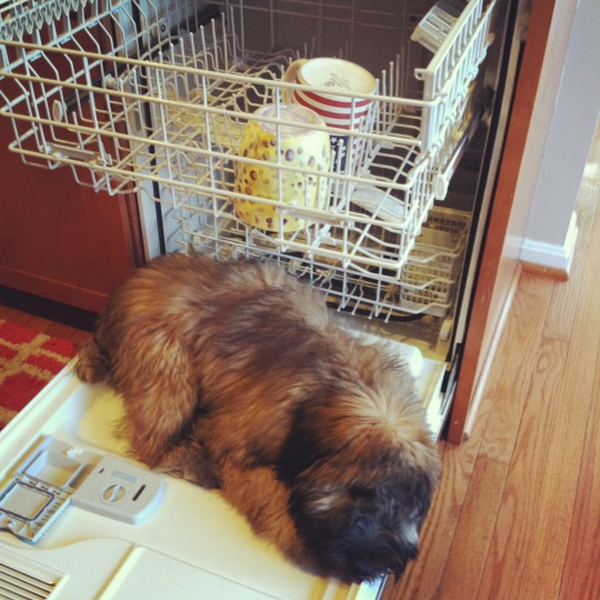 Dog sleeping in dishwasher.